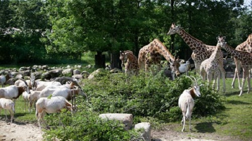 sex aarhus Aalborg Zoo kort